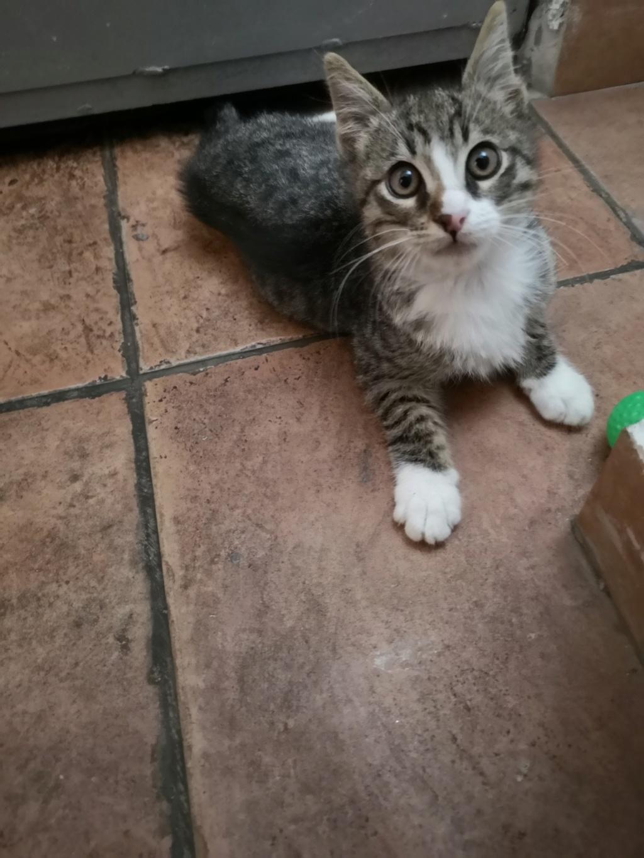 Χαρίζεται γατάκι  Img_2012