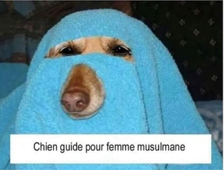 Chien guide 20180615
