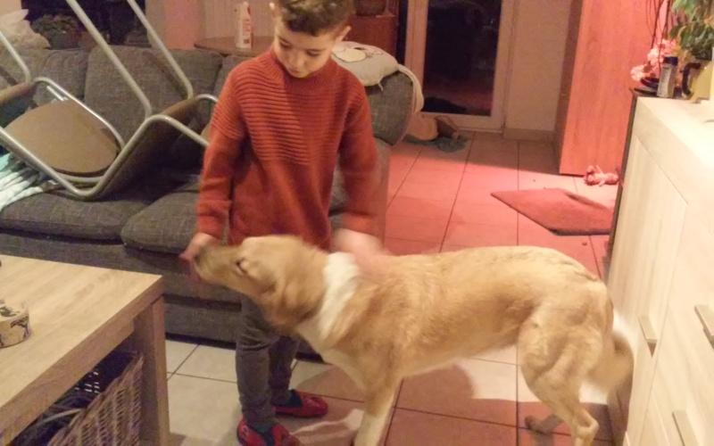 SHYVA - femelle croisée Labrador de taille moyenne à grande, née environ en février 2014 - (Pascani) adoptée par Aurélie (Belgique) - DECEDEE - Page 5 20181115