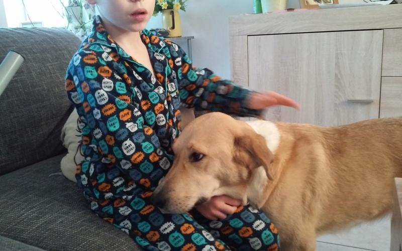 SHYVA - femelle croisée Labrador de taille moyenne à grande, née environ en février 2014 - (Pascani) adoptée par Aurélie (Belgique) - DECEDEE - Page 5 20181116