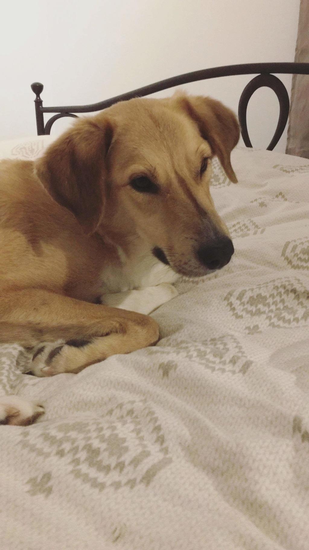 SHYVA - femelle croisée Labrador de taille moyenne à grande, née environ en février 2014 - (Pascani) adoptée par Aurélie (Belgique) - DECEDEE - Page 6 Receiv38