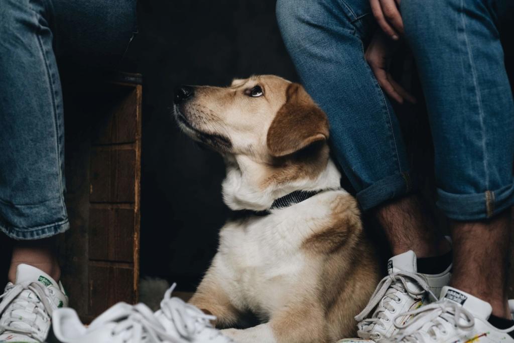 SHYVA - femelle croisée Labrador de taille moyenne à grande, née environ en février 2014 - (Pascani) adoptée par Aurélie (Belgique) - DECEDEE - Page 6 Receiv49