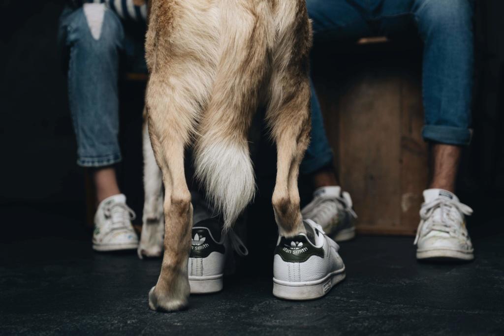 SHYVA - femelle croisée Labrador de taille moyenne à grande, née environ en février 2014 - (Pascani) adoptée par Aurélie (Belgique) - DECEDEE - Page 6 Receiv52