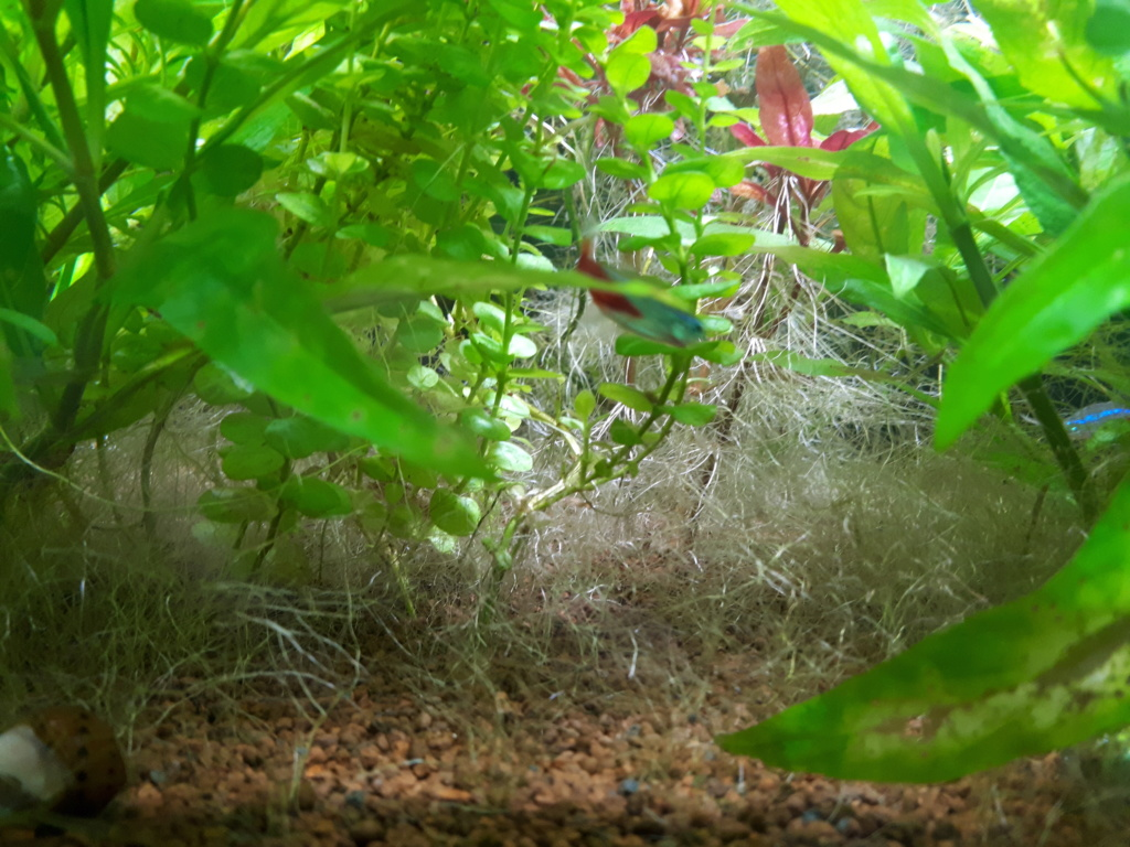 fond de l'aquarium tapis de racine 20181211