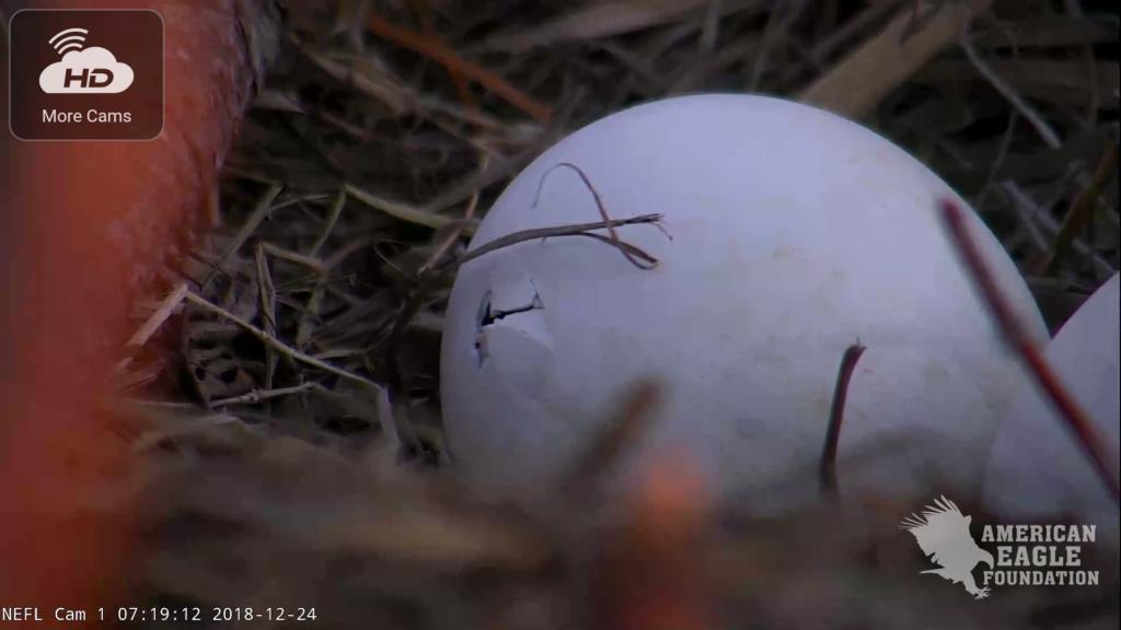 AEF Northeast Florida Nest of Bald Eagles Romeo & Juliet   - Pagina 13 Screen15