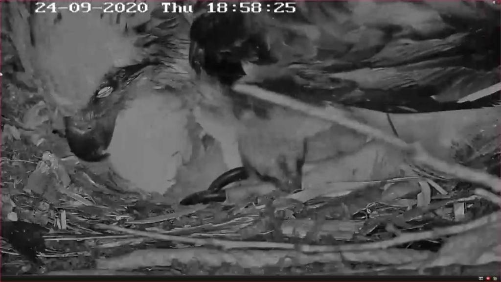 Port_Lincoln Osprey Live Stream 2020/2021 - Pagina 3 Screen25
