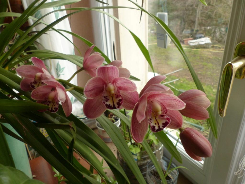 Les orchidées - Page 35 P1050013