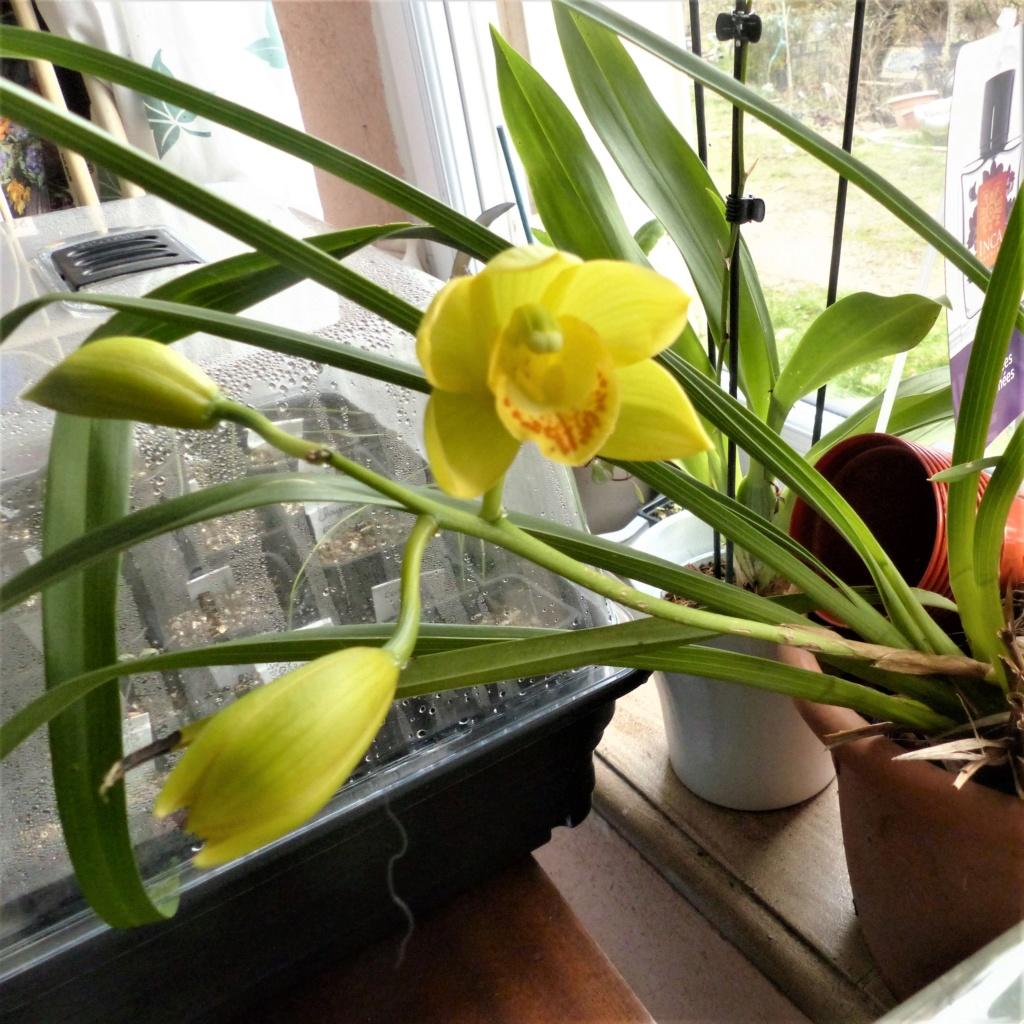Les orchidées - Page 35 P1050173