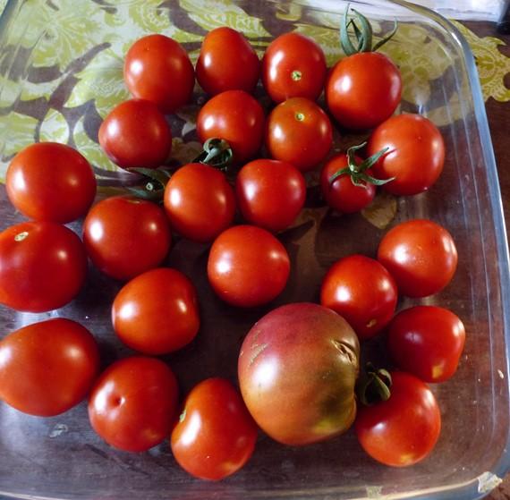 Tomates 2019 - Page 15 P1060914