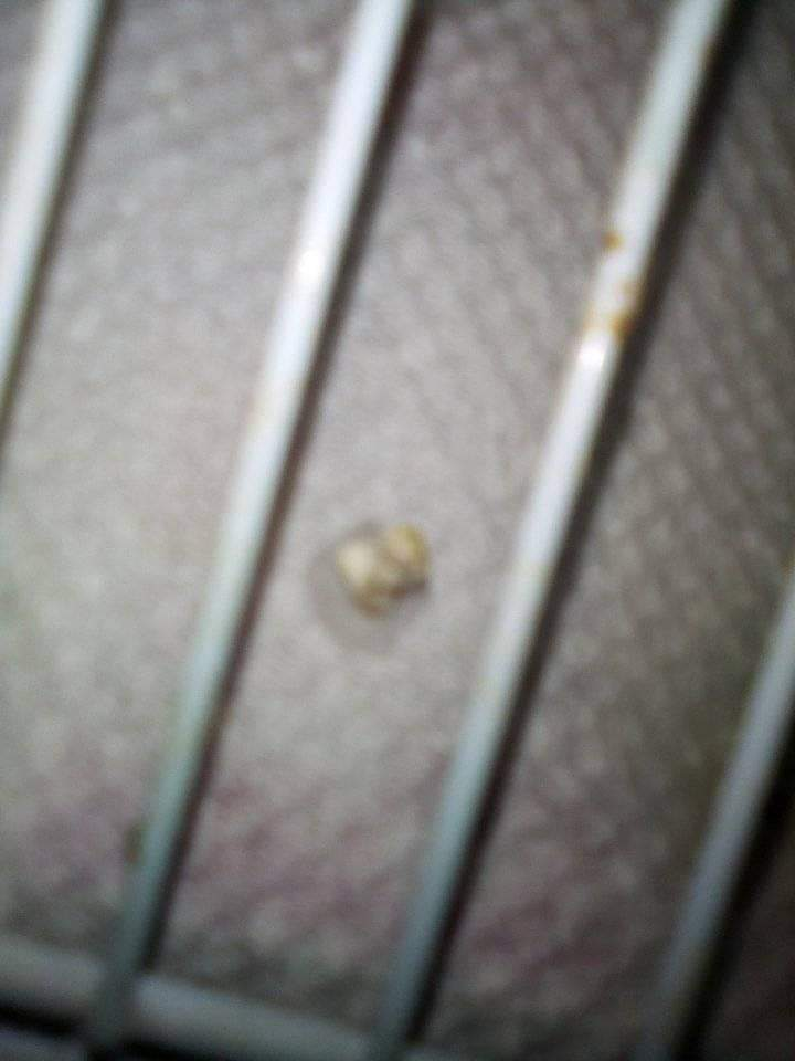 Fêmea mandarim doente Receiv13
