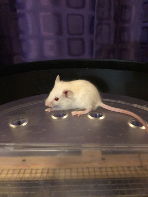 Baby Mice Available in OK B7c20010