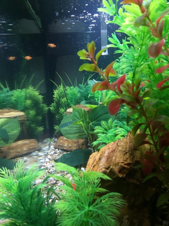 Perte des poissons  Afe64210