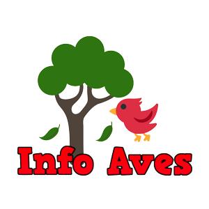 Info Aves