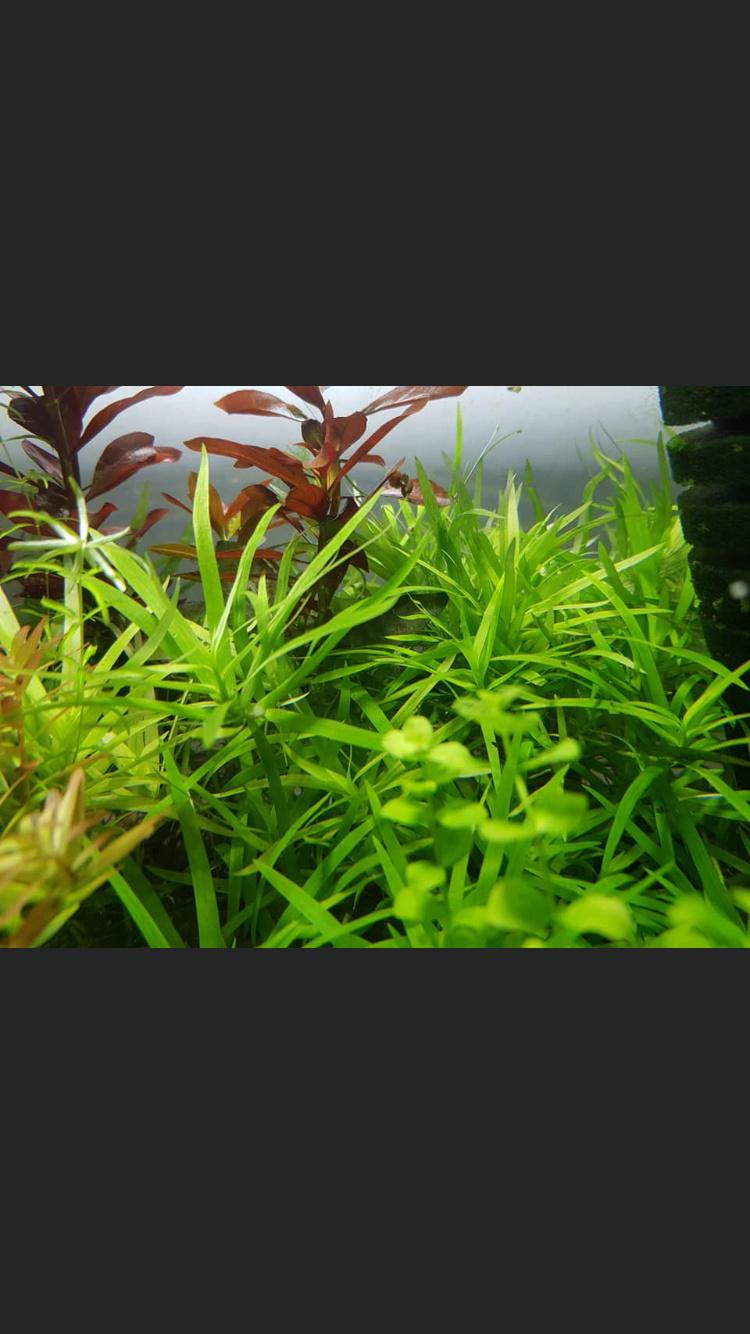 Qui connaît c'est plantes ?  Ab79bd10