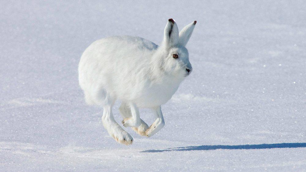 Ficha de Frostward, la mano de hielo[TERMINADA] Conejo10