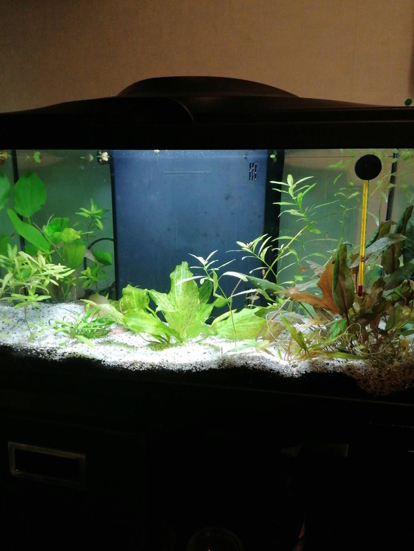 Aquarium 60 l  - Page 2 15848111