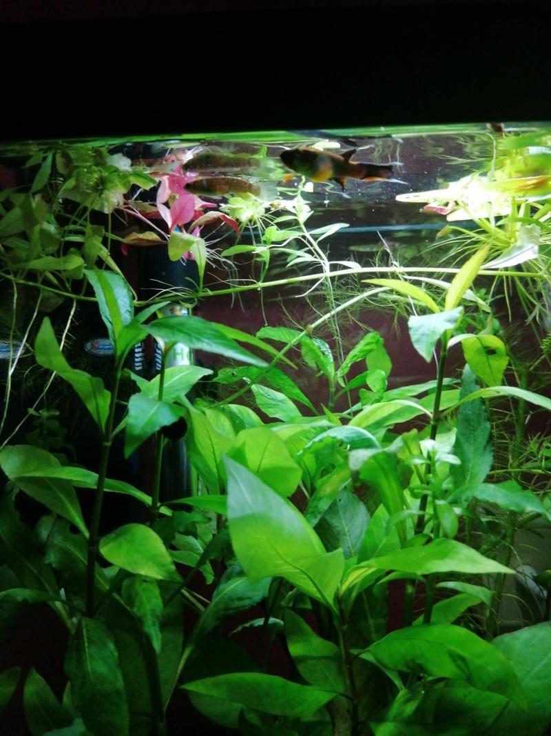 Projet aquarium 30 l  - Page 5 15961111