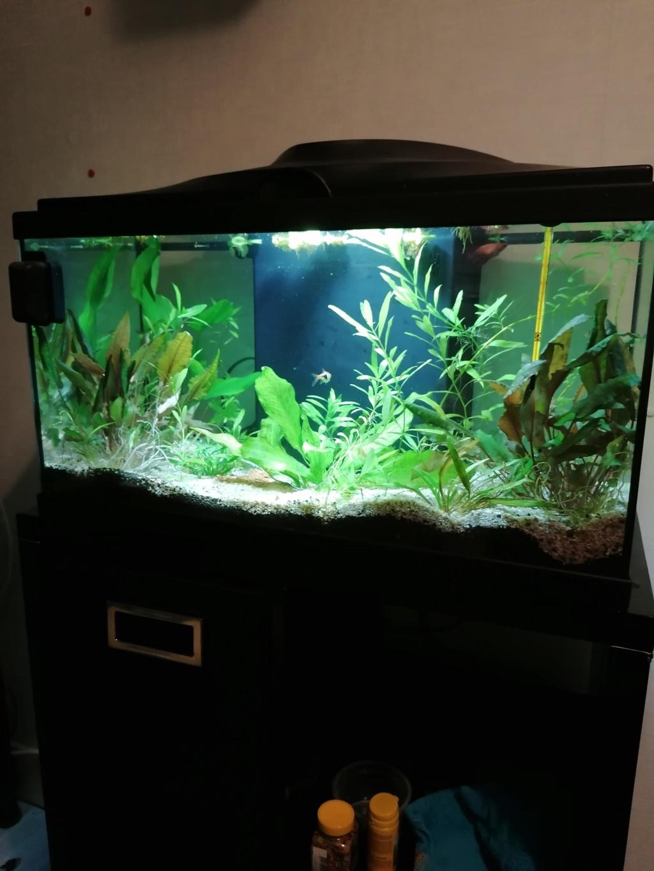 Aquarium 60 l  - Page 2 Img_2012