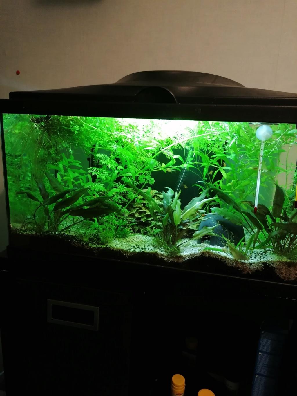 Les aquariums du confinement Img_2025