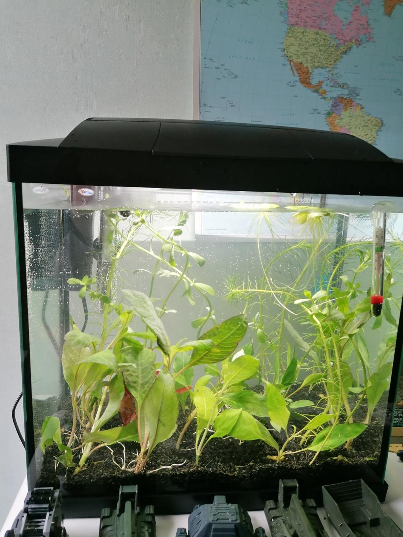 Projet aquarium 30 l  - Page 2 Img_2031