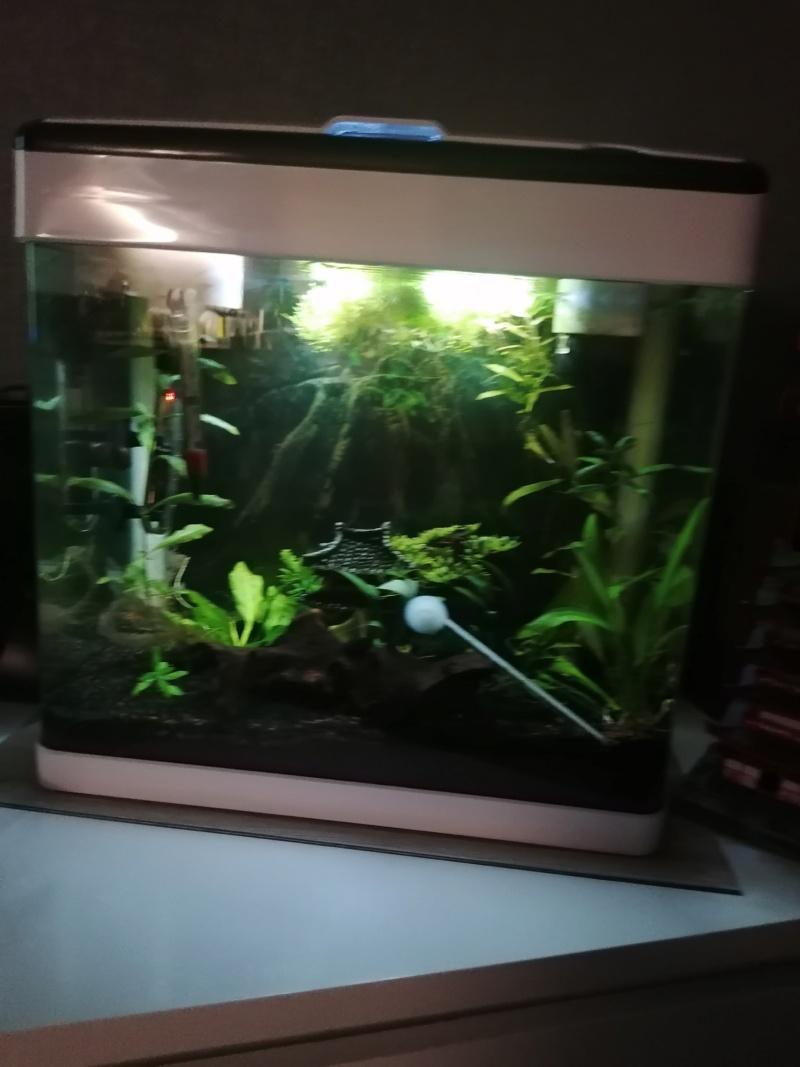 Population pour mon aquarium 20 l  Img_2040