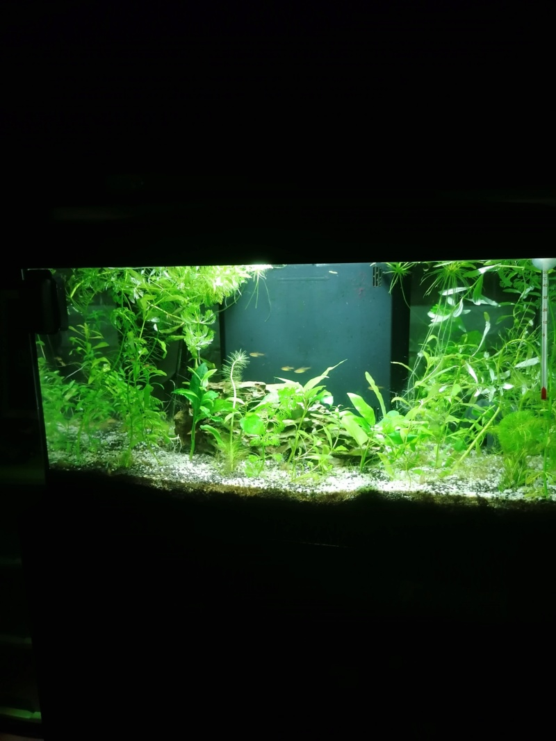 Projet aquarium 30 l  - Page 5 Img_2043