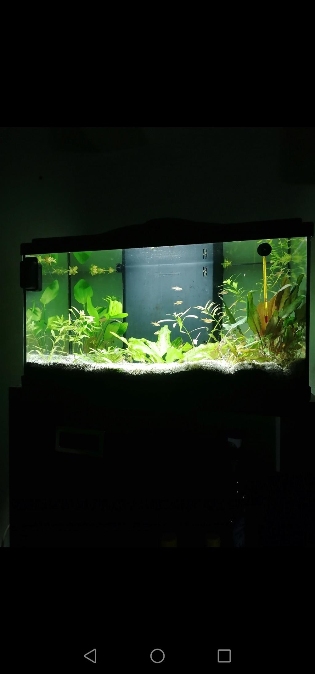 Les aquariums du confinement Screen22