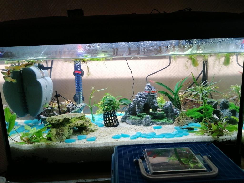 Présentation de mon aquarium  15862710