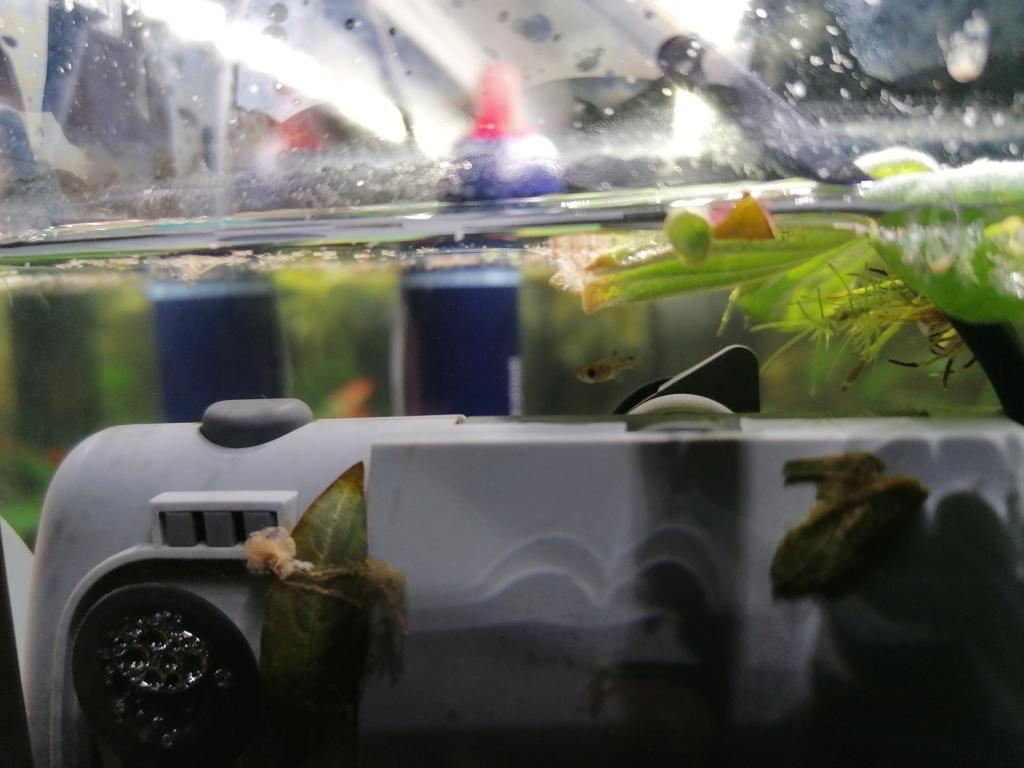 Présentation de mon aquarium  15862711