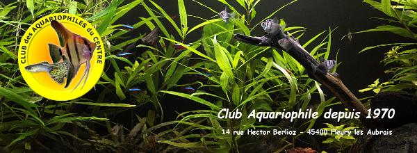 Club des Aquariophiles du Centre - Portail Bannie10