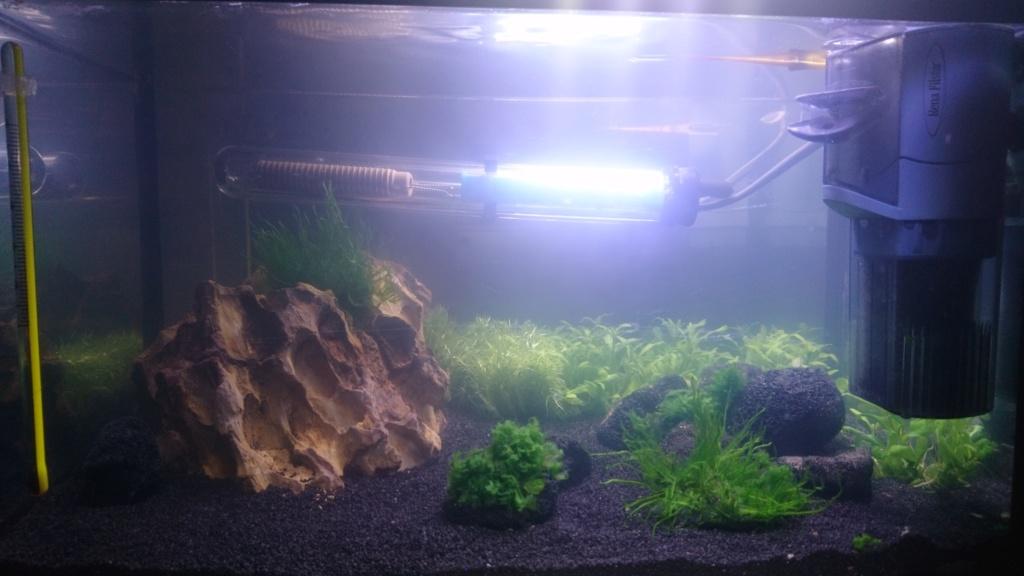 Premier aquarium 12L lancé Dsc_0510