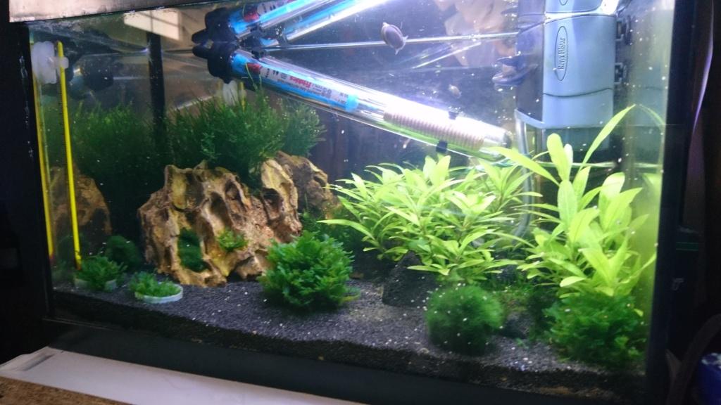 Premier aquarium 12L lancé Dsc_0511