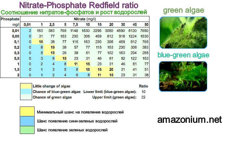 Petit Bac 74 litres pour recommencer..et son suivi.. - Page 7 Algae-10