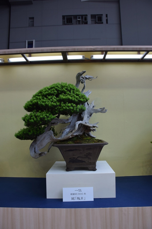 The 8th World Bonsai Convention, SAITAMA CITY - Page 2 611
