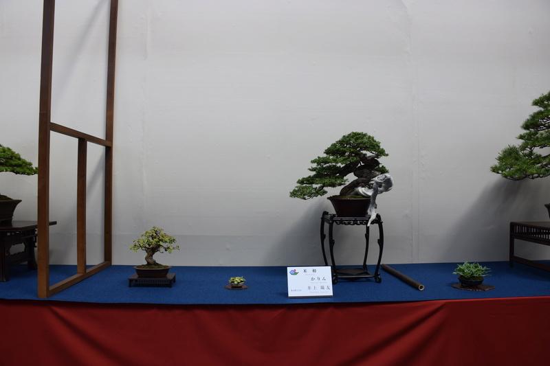 The 8th World Bonsai Convention, SAITAMA CITY - Page 2 Dsc_0263
