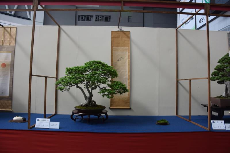 The 8th World Bonsai Convention, SAITAMA CITY - Page 2 Dsc_0265