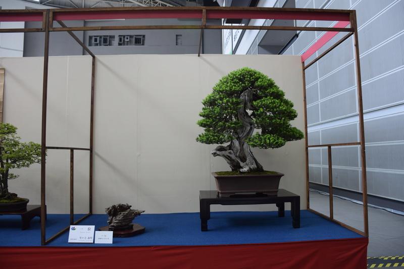The 8th World Bonsai Convention, SAITAMA CITY - Page 2 Dsc_0273