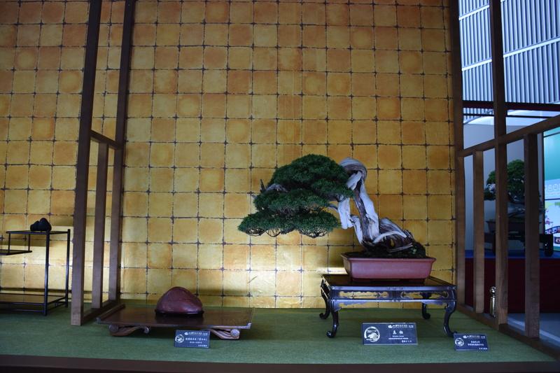 The 8th World Bonsai Convention, SAITAMA CITY - Page 2 Dsc_0274