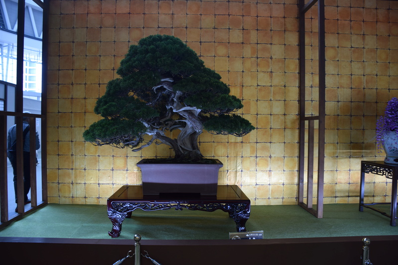 The 8th World Bonsai Convention, SAITAMA CITY - Page 2 Dsc_0280