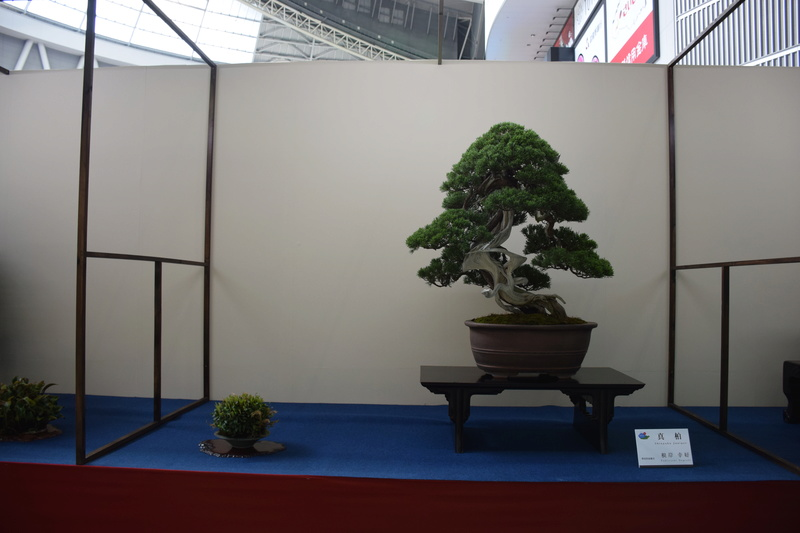 The 8th World Bonsai Convention, SAITAMA CITY - Page 2 Dsc_0284