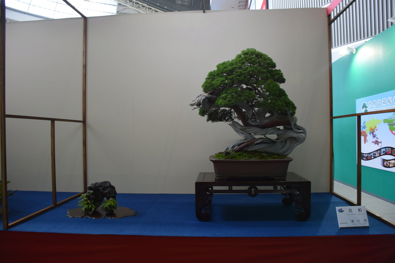 The 8th World Bonsai Convention, SAITAMA CITY - Page 2 Dsc_0285