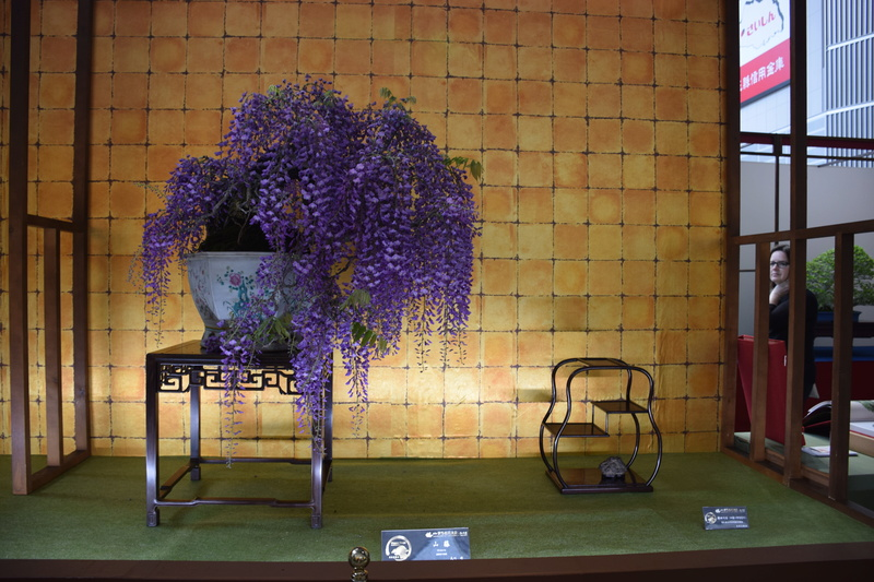 The 8th World Bonsai Convention, SAITAMA CITY - Page 2 Dsc_0286