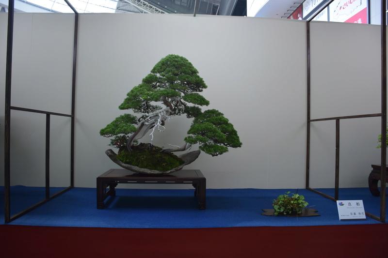 The 8th World Bonsai Convention, SAITAMA CITY - Page 2 Dsc_0290