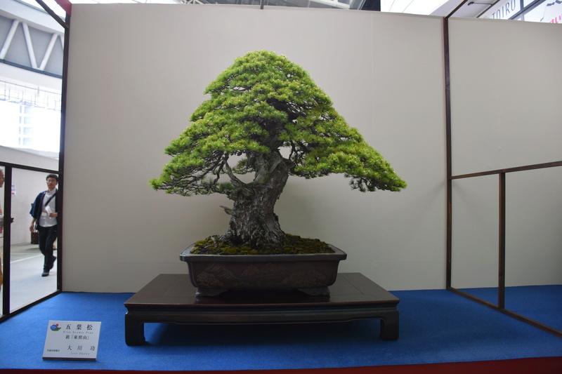 The 8th World Bonsai Convention, SAITAMA CITY - Page 2 Dsc_0293