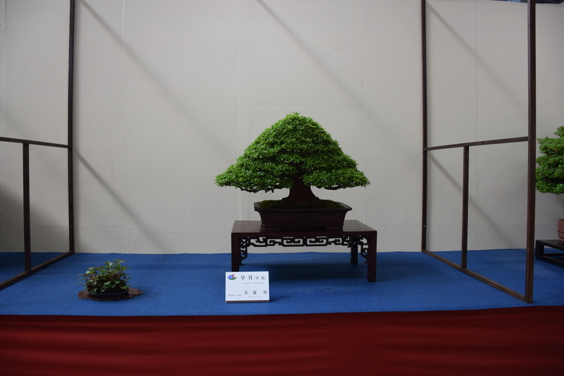 The 8th World Bonsai Convention, SAITAMA CITY - Page 2 Dsc_0297