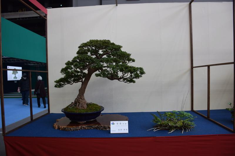 The 8th World Bonsai Convention, SAITAMA CITY - Page 2 Dsc_0305