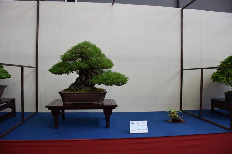 The 8th World Bonsai Convention, SAITAMA CITY - Page 2 Dsc_0309