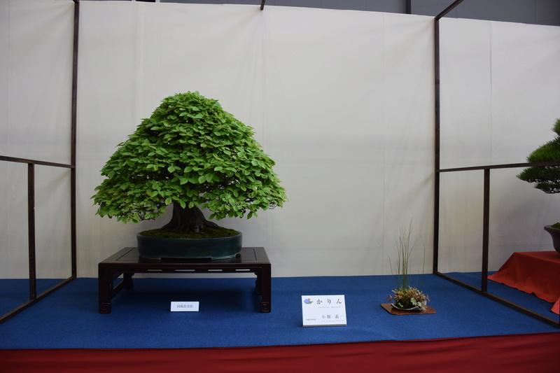 The 8th World Bonsai Convention, SAITAMA CITY - Page 2 Dsc_0400