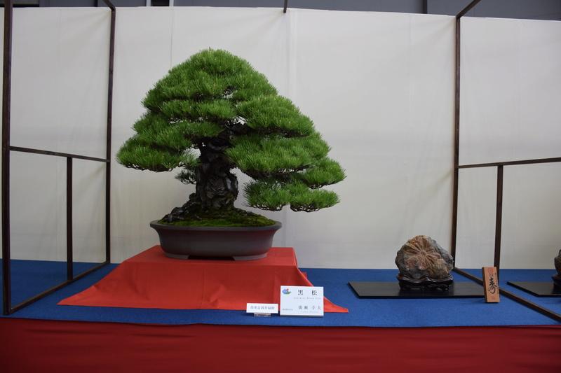 The 8th World Bonsai Convention, SAITAMA CITY - Page 2 Dsc_0402