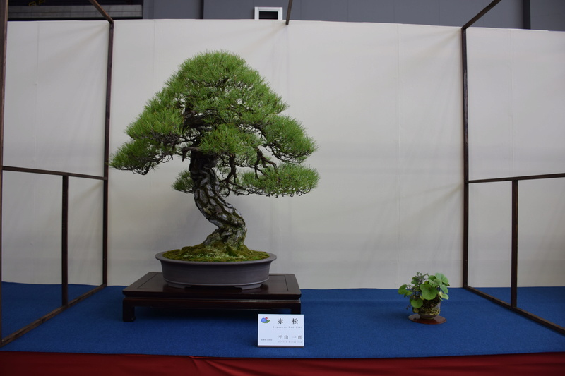 The 8th World Bonsai Convention, SAITAMA CITY - Page 2 Dsc_0403